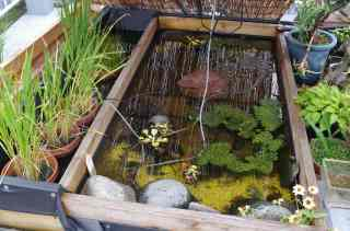 s-IMGP0522メダカ池と稲