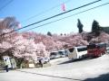 H26.4.15伊那市高遠城址公園桜まつり@IMG_1958