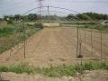 H26.4.27トマトの雨除け棚骨組み作成@IMG_1452