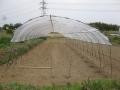 H26.4.28トマトの雨除け棚完成@IMG_1454
