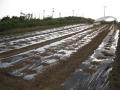 H26.5.8夏野菜定植場所準備@IMG_1544