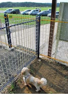 捨てられた犬2
