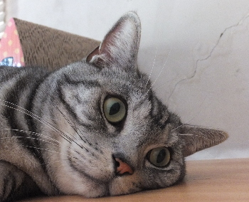 今日は猫神1