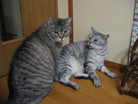 キム&タク