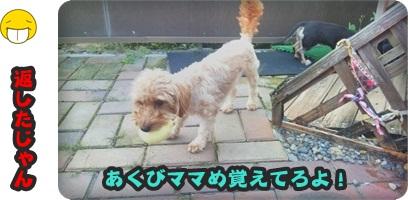 宝物庭DSC_0220