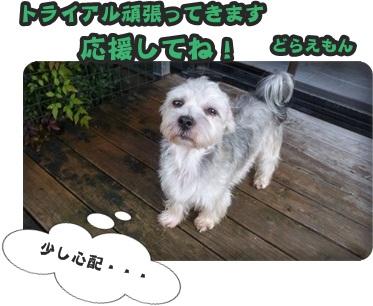 どらトライアル006