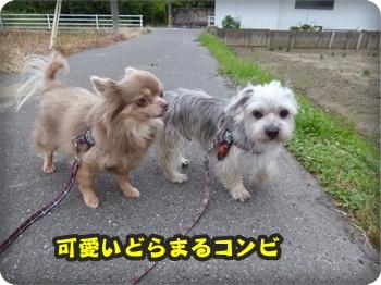 散歩サマー025