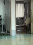 居室内に向けられた扇風機
