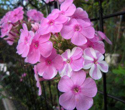 今年自然交配で生まれたお花