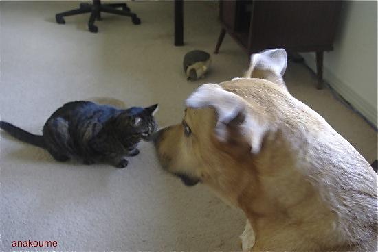猫に怯える3