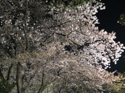 yozakura minka (2)