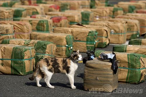 【ニュージーランド】お手柄ネコ、大麻入り袋を飼い主へ