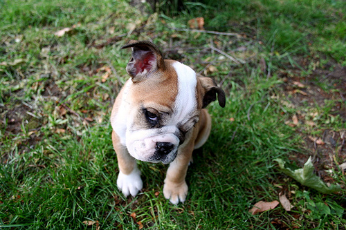 【大阪】「犬税導入は困難」検討委が答申へ
