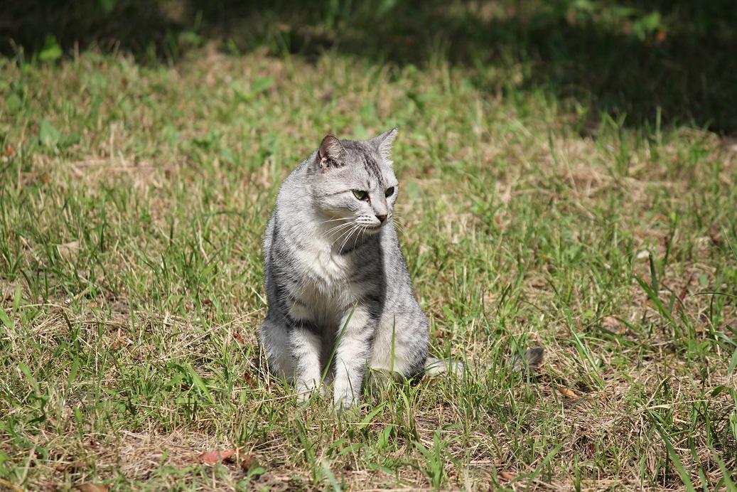 20140923白猫