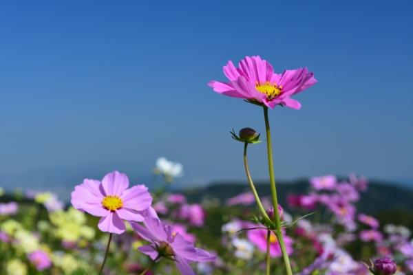 花さじき5