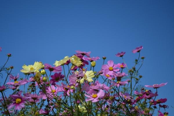 花さじき8