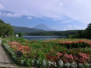 西湖 からの富士山