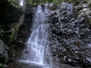 母の白滝 凄い