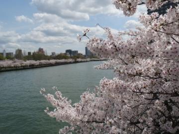 大阪大川・桜