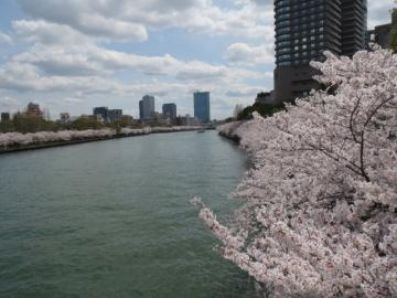 大阪大川沿いの桜