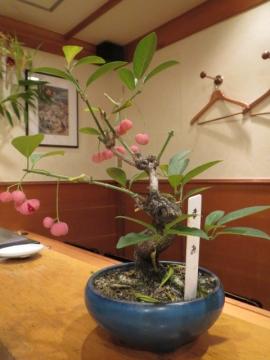 「まゆみ」の盆栽
