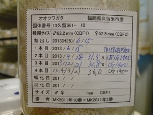 s2013 1-10 36gカード