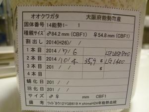 s14能勢1-1 359 カード