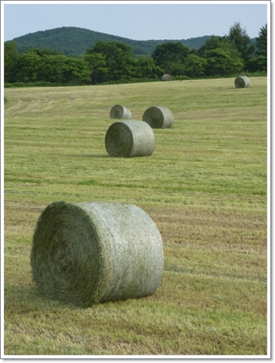 牧草ロール2014年8月1
