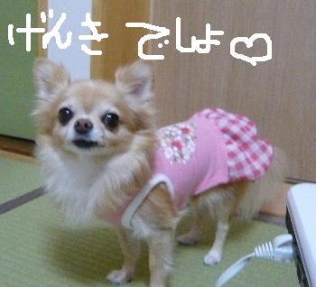 blog2014101604.jpg