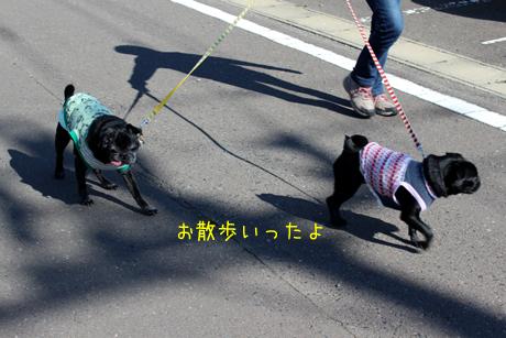 お散歩お散歩~♪
