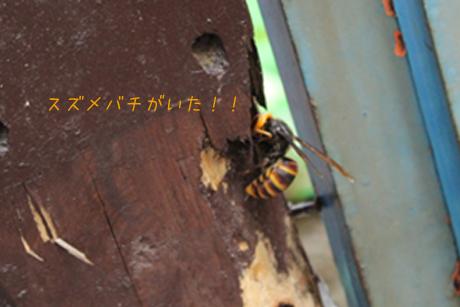 スズメバチがいた