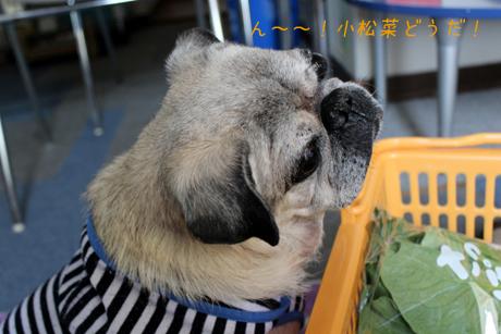 小松菜どうですか?