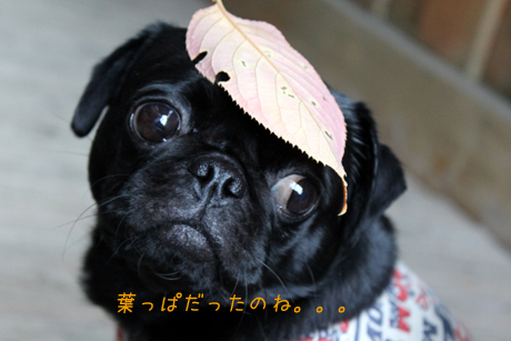 葉っぱだったね