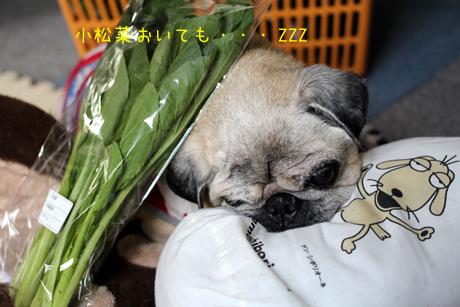 小松菜置いてみた