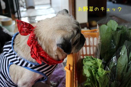 野菜チェック