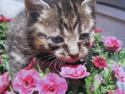 子猫 キジトラ