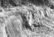 高良山・神籠石
