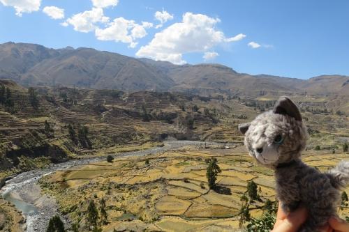 あずこ、ペルーに行く52