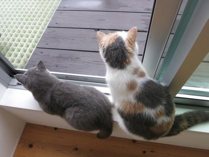 窓際から外を眺める2にゃん