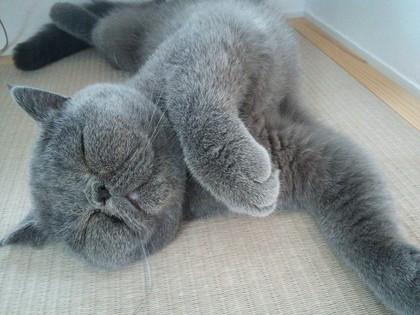 可愛すぎる寝顔