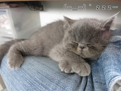 お腹いっぱいで寝ちゃいました