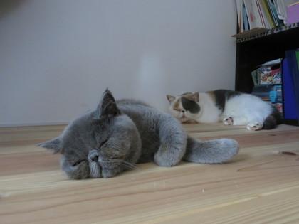 仲良く微妙な距離で寝てる♡