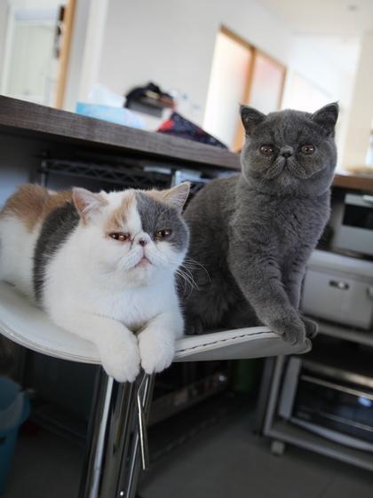 かぁさんの椅子に2ニャンで