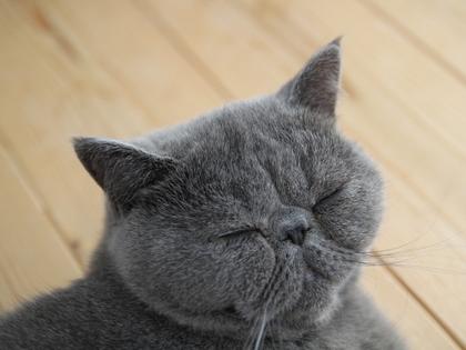 おっさんの寝顔