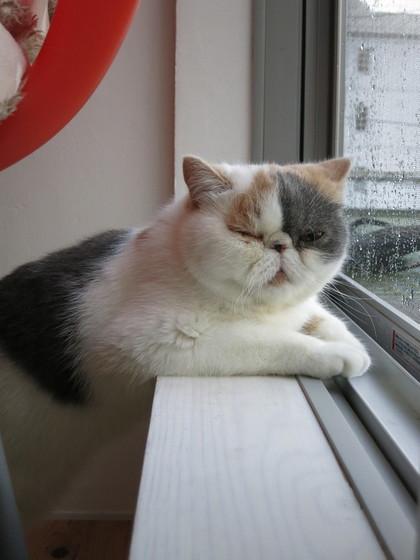 かぁさん今日も雨ですか?