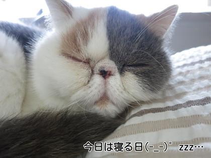 今日は寝る日。いつもか、、、