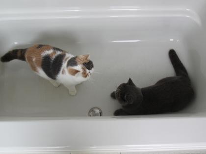 仲良く入浴?