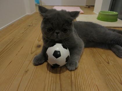 サッカーの練習中
