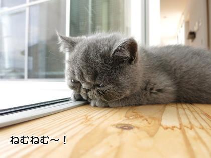 窓際でねむねむ~!