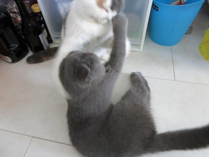 へいちゃんの猫ぱ〜んち!